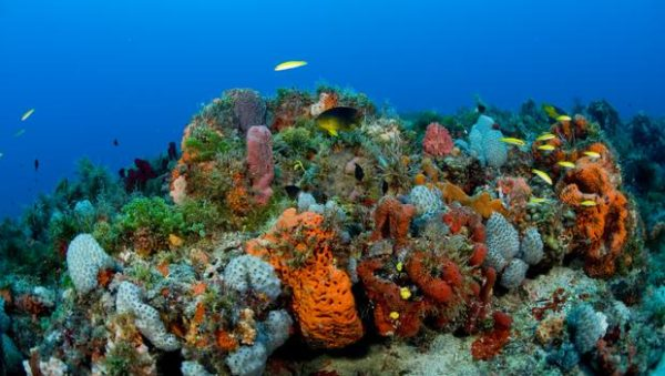 coral-reef-newscom-nhpaphotos074072