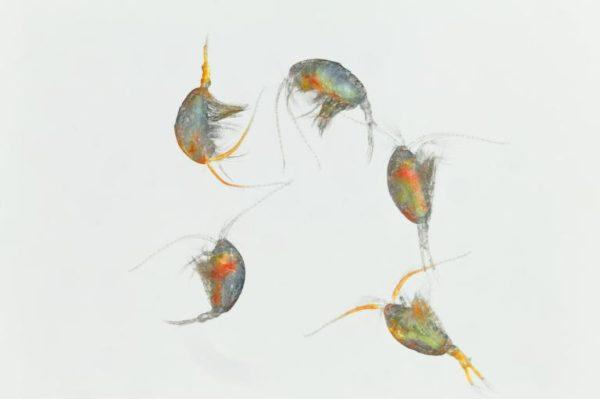 Drunk-Plankton.adapt.768.1 (1)